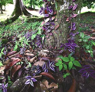Lancetilla Botanical Gardens in Honduras